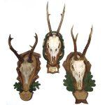 Horns 17206-Edit